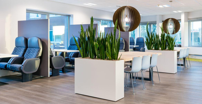 Planten Op Kantoor : Kantoorplanten portfolio interieurbeplanting