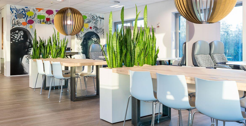 Kantoorplanten portfolio interieurbeplanting for Interieur beplanting